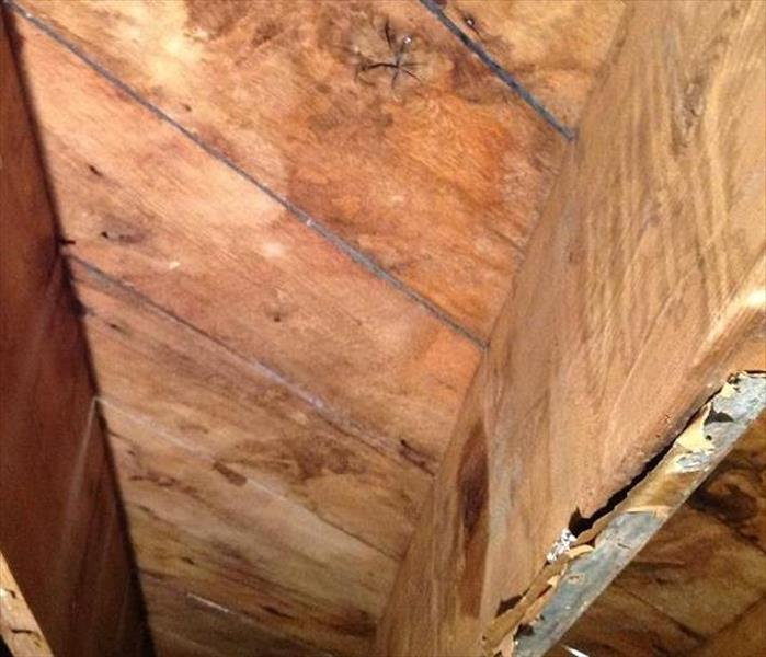 Knoxville Mold in a Crawlspace After