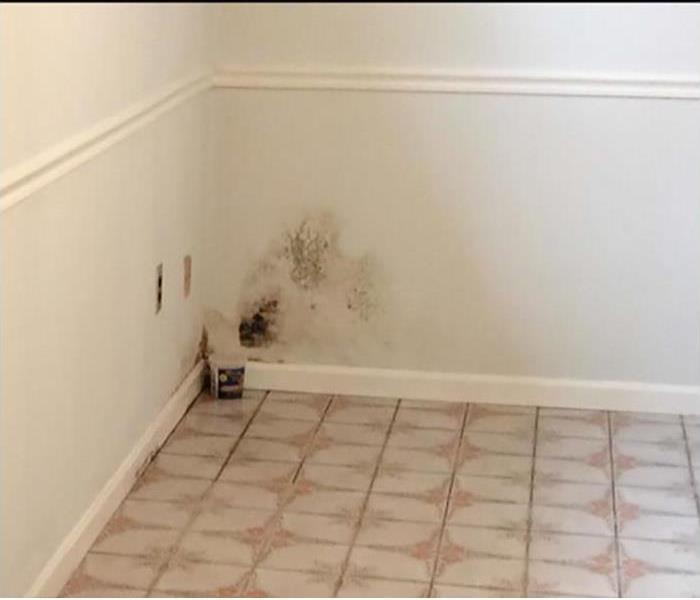 Mold Restoration In Downtown Knoxville Before