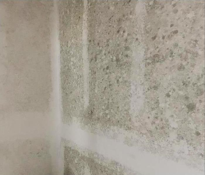 Mold Damage Restoration In Knoxville