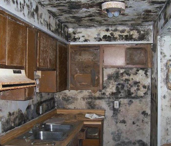 Rocky Hill Mold Attack