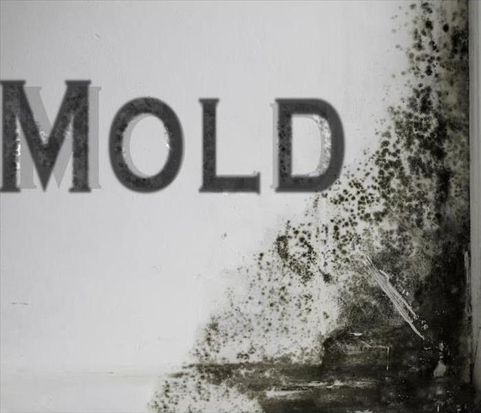 Mold Remediation The Mold Damage Mystery in Knoxville Revealed