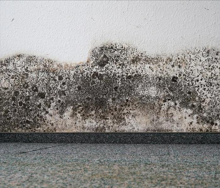 Mold Remediation Knoxville Mold damage - What to Do If You See or Smell Mold Damage in Your Knoxville Home